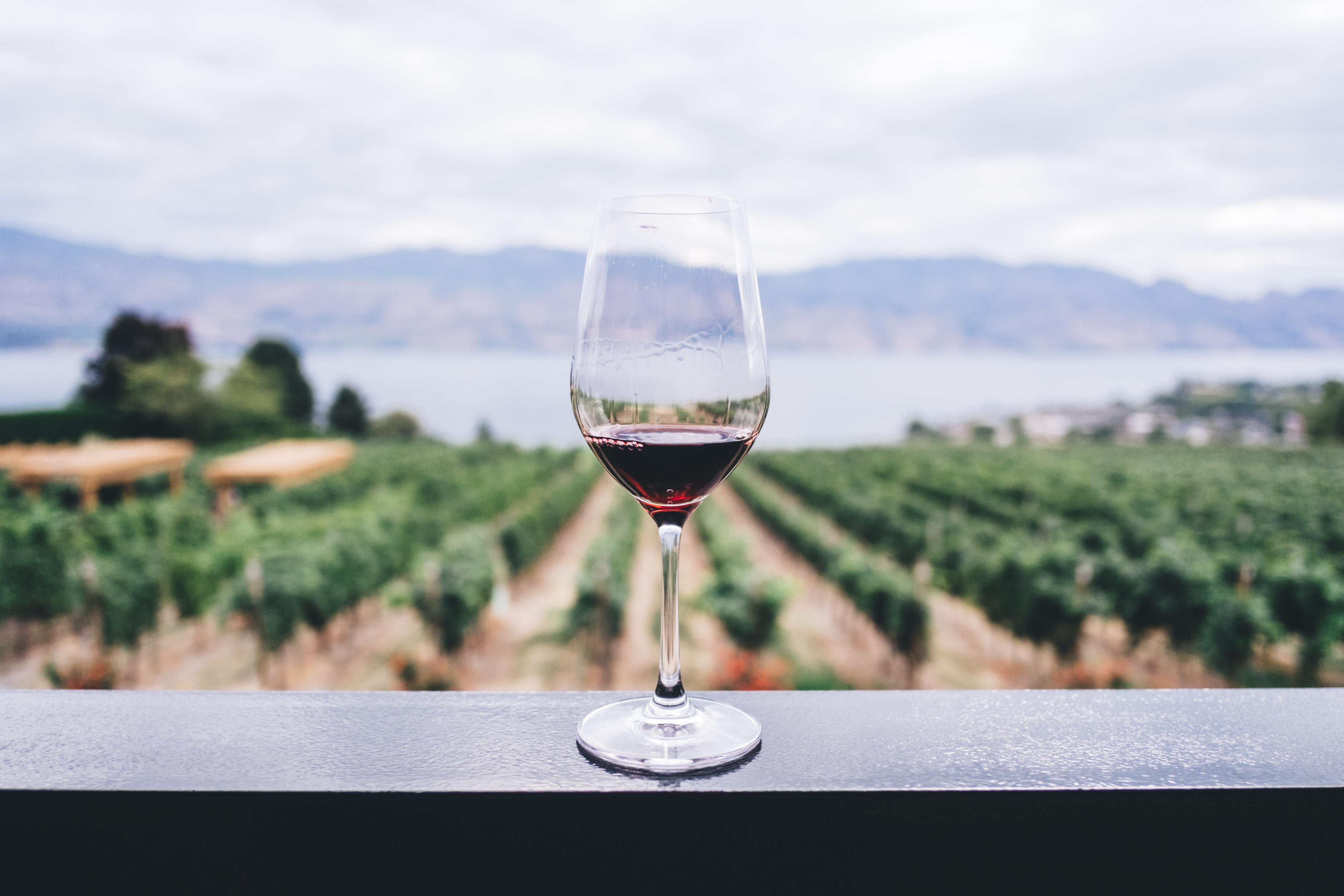 Goûter aux saveurs du terroir grâce aux vins biodynamiques